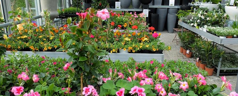 Balkonpflanzen Blumen Hofmann